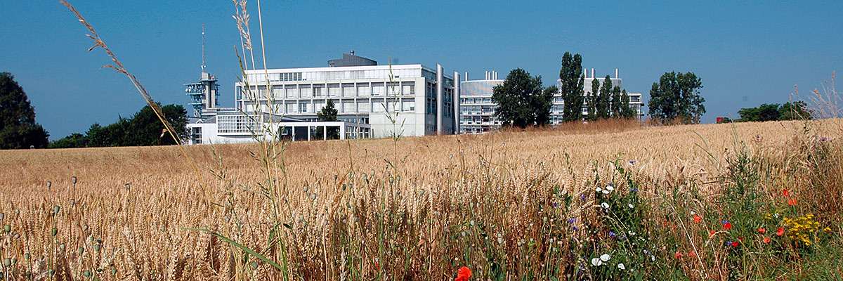 UNIL Campus - Génopode in summer